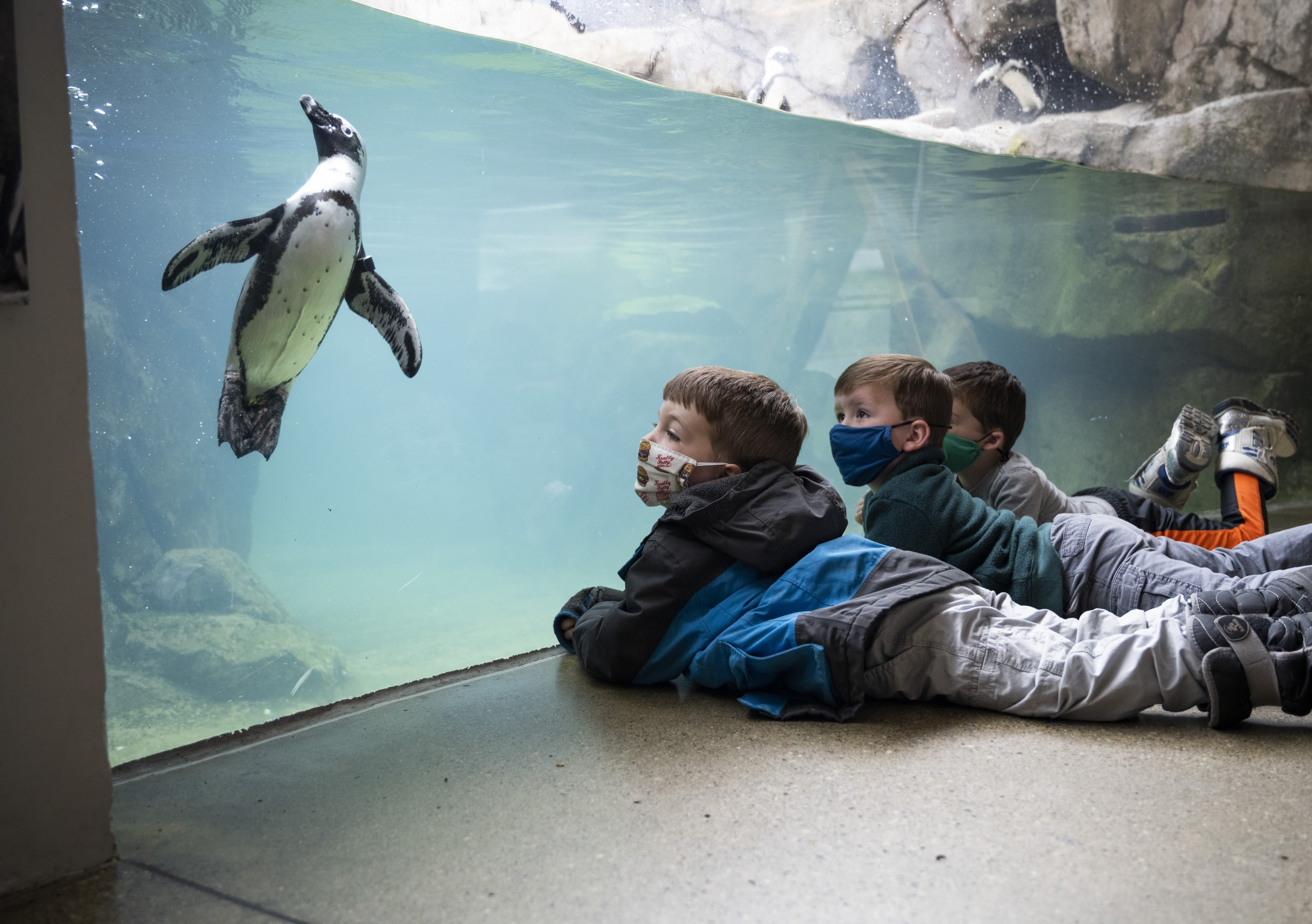 Kids In Penguin Point National Aviary 2021 Mike Faix