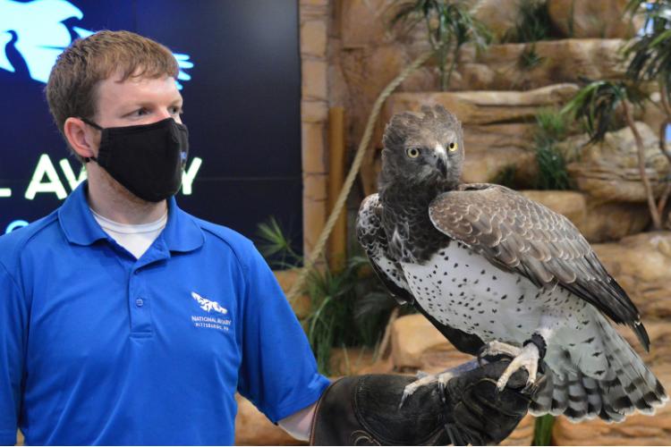 Martial Eagle National Aviary 2021 Mike Faix